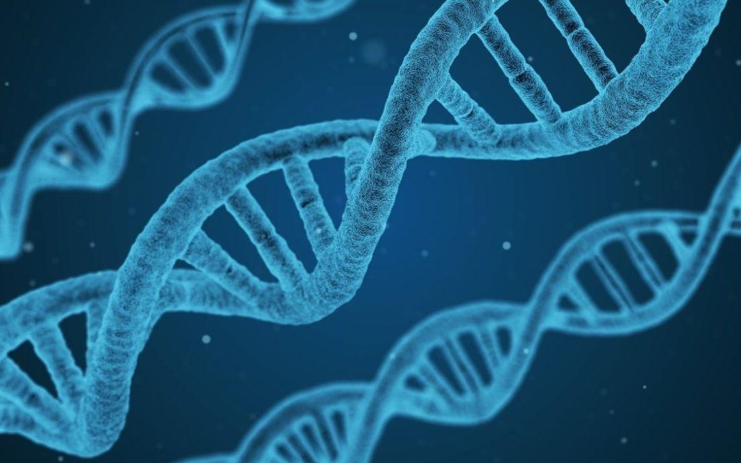 Epigenetik: Wie unser Glaube Gene und Verhalten steuert (Teil 1)