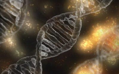 Epigenetik: Glaube, Stress und Gene (Teil 2)